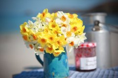 Scented Narcissi in blue jug
