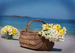 Basket of Scented Narcissi on the beach at Great Bay