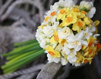 Scented Narcissi from Scillyflowers
