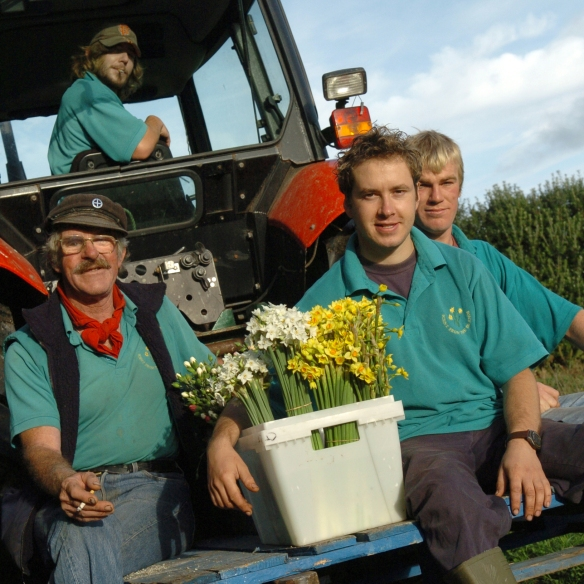 Churchtown Farm Real Men with Scented Narcissi