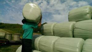 Hay ho! Nearly there with the last of our 290 bales.
